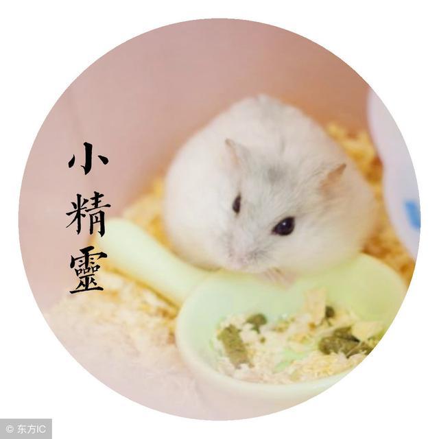 属鼠人的运势与婚姻(属鼠人2021年婚姻运势)-第4张图片-天下生肖网