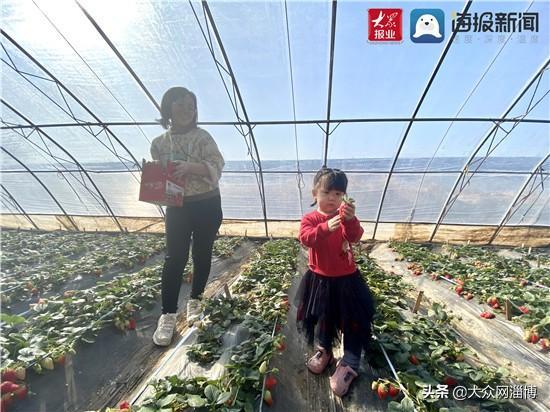"""馨香满庭:踏雪寻""""莓""""赏国兰——文昌湖冬日嘉年华活动开启"""