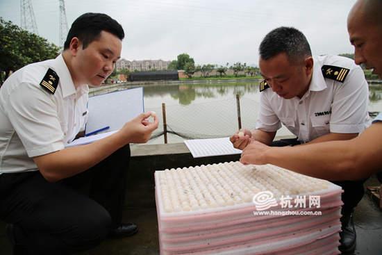 台湾鳖:48万枚甲鱼蛋进入杭州 3年后