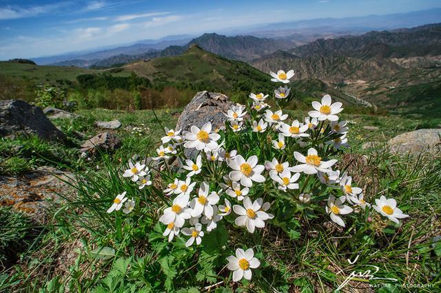 福利   打造小吾植物图鉴:1年内如何拍到150栽北京野花