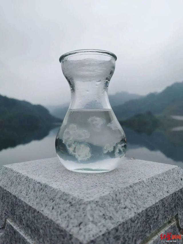 5亿多年前诞生!奇怪桃花水母惊现四川德阳什邡八角水库