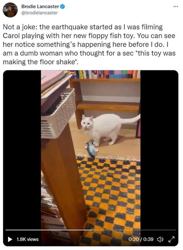 澳大利亚地震前夕居民录下猫的反应:它突然停下来,忧心忡忡地看着我