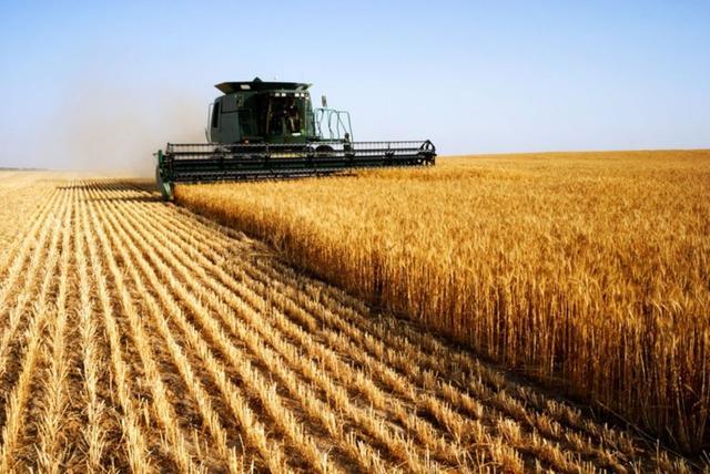 澳大利亚再遭滑铁卢,马来西亚对澳下狠手,500万美元小麦被查扣