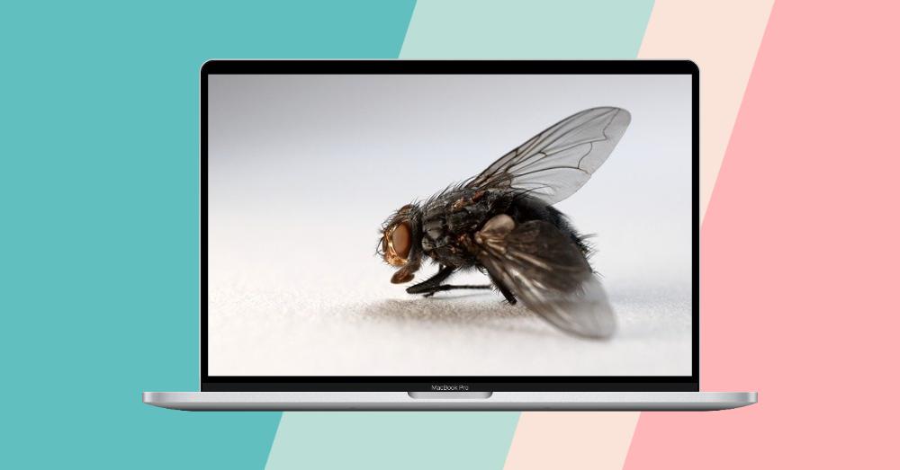 Designify - 免费去背景且自动帮你设计合成图像