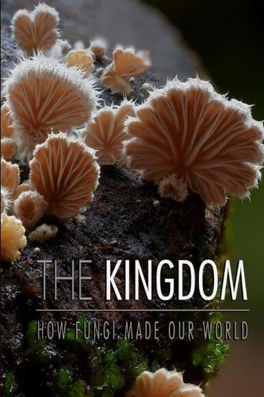 真菌如何造就世界海报