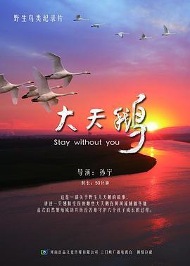 大天鹅 电影海报