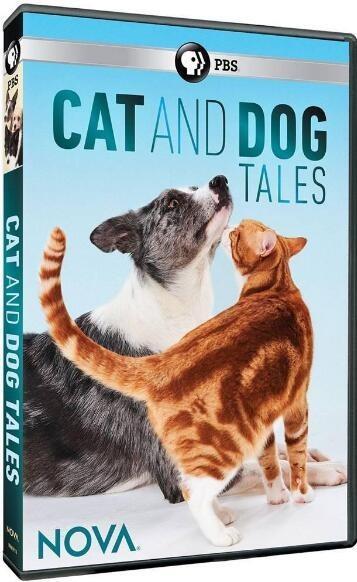 猫的故事海报