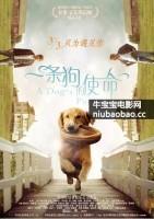 一条狗的使命海报