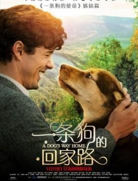 一条狗的回家路海报