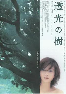 透光的树海报