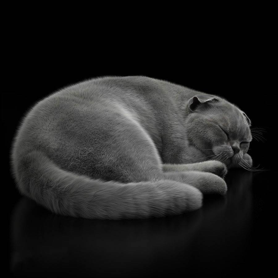 逼真写实的猫模型