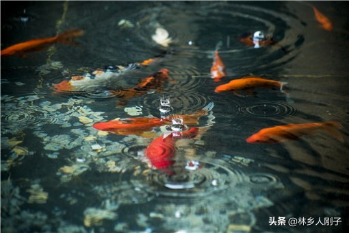 鱼塘养殖什么最赚钱(养殖什么鱼可以三个月有利润)插图(2)