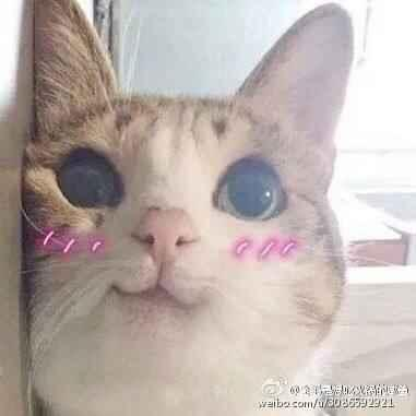 618星秀猫助手优化版