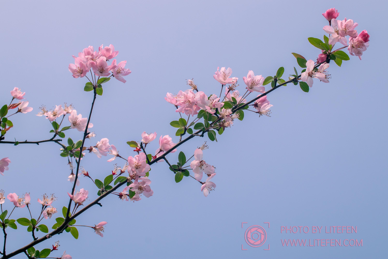 武汉商学院——春