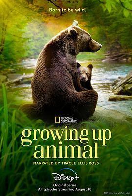 动物成长海报