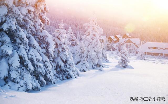 天气预报:今年冬天雨雪多吗?看下霜天数就知道,看老祖宗怎么说
