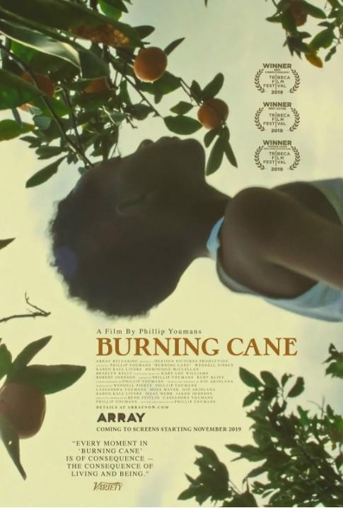 燃烧的甘蔗海报
