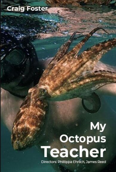 我的章鱼老师海报