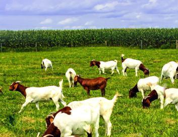 从几点分析可贝思羊奶粉奶源如何