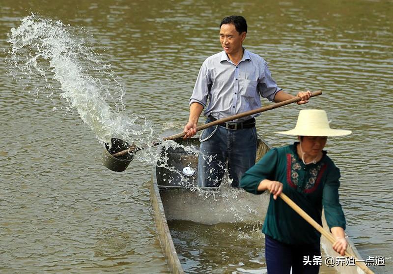 消毒剂在水产养殖中高效、安全使用,病死鱼勿乱扔