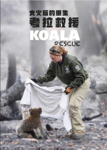 大火后的重生:考拉救援海报
