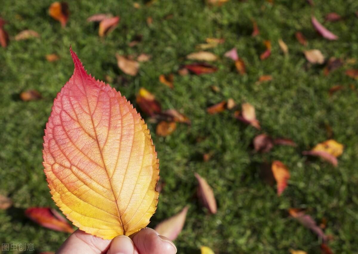 秋季咽喉炎高发,收好这份护嗓攻略!轻松搞定痰多咳嗽咽痛干痒