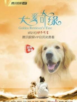 犬爱奇缘海报